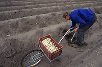 GERMANY,  polish saisonal labourer harvest asparagus in Beelitz near Berlin / DEUTSCHLAND, polnische Erntehelfer bei Spargelernte auf Hof Syring in Beelitz