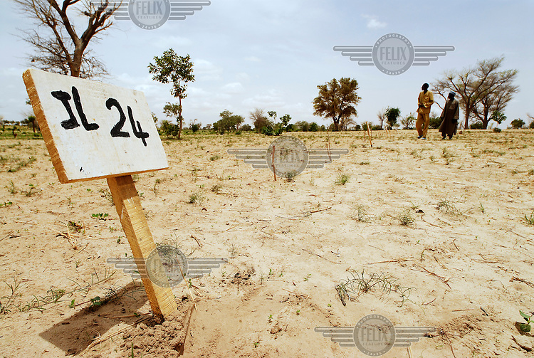 A small sign indicates the type of millet seed planted in an IFAD-funded crop trialling programme at El Gueza. The project's aim is to determine which crop varieties are best suited to the dry sub-Saharan Sahel lands of southern Niger.