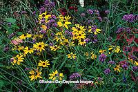 63821-11011 Black-eyed Susan (Rudbeckia hirta), Brazilian Verbena (Verbena bonariensis), Sun Coleus, Red Pentas, Pink Hibiscus  IL