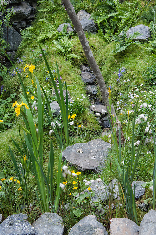 A Hebridean Weaver's Garden, designed by Jackie Setchfield & Martin Anderson, Artisan Garden Gold medal winner, RHS Chelsea Flower Show 2013. Plants include yellow flag irises and marsh marigolds.