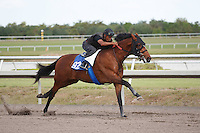 #92Fasig-Tipton Florida Sale,Under Tack Show. Palm Meadows Florida 03-23-2012 Arron Haggart/Eclipse Sportswire.