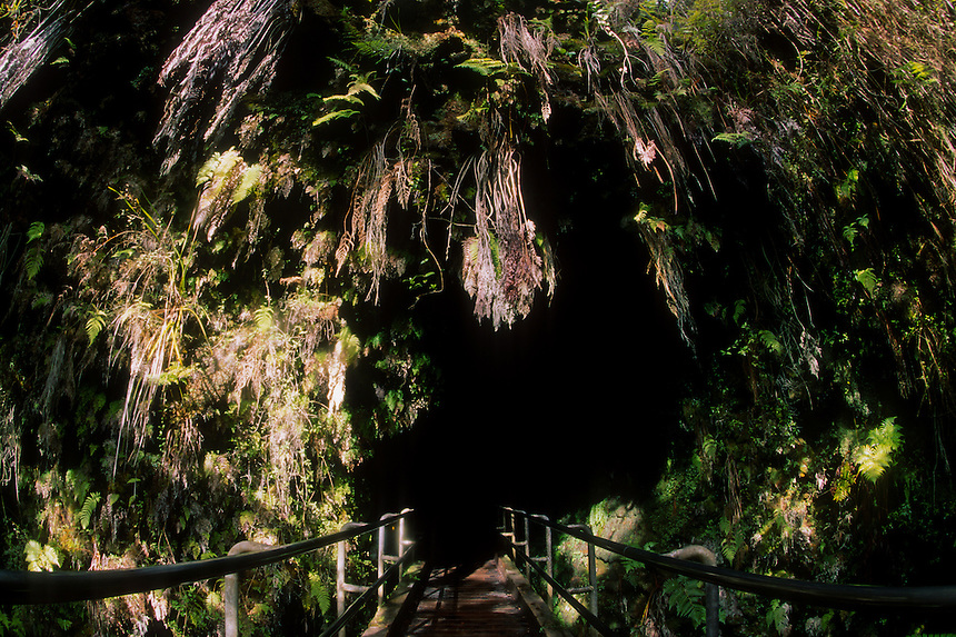 Thurston Lava Tube Entrance, Big Island, Hawaii, US