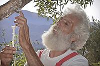 Castelbuono, Giulio Gelardi, the oldest and one of the last producers of manna in the world.<br /> <br /> Castelbuono, Giulio Gelardi, il pi&ugrave; anziano e tra gli ultimi produttori di manna nel mondo.