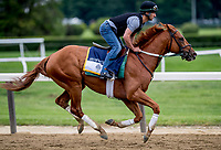 ELMONT, NY - JUNE 07: Hofburg gallops around the track as horses prepare Thursday for the 150th running of the Belmont Stakes at Belmont Park on June 7, 2018 in Elmont, New York. (Photo by Scott Serio/Eclipse Sportswire/Getty Images)