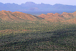 The desert floor at sunrise, Organ Pipe Cactus National Monument, Arizona