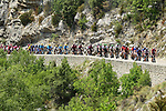 The peloton in action during Stage 17 of the 2019 Tour de France running 200km from Pont du Gard to Gap, France. 24th July 2019.<br /> Picture: ASO/Alex Broadway | Cyclefile<br /> All photos usage must carry mandatory copyright credit (© Cyclefile | ASO/Alex Broadway)
