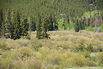 willow wetlands, Bierstadt Moraine, Hollowell Park, spring, trees, forest, landscape, scenic, nature, outdoors, Rocky Mountain National Park, Colorado, Rocky Mountains, USA