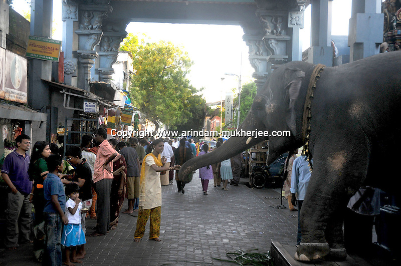 A young Indian girl feeds an elephant in a Hindu temple in the heart of the French colony in Pondicherry .Arindam Mukherjee/Sipa