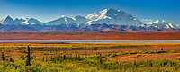 Autumn tundra colors and Mt. Denali, Denali National Park, Alaska.