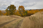 Idaho, Eastern, Ashton. A country road through autumn foliage.