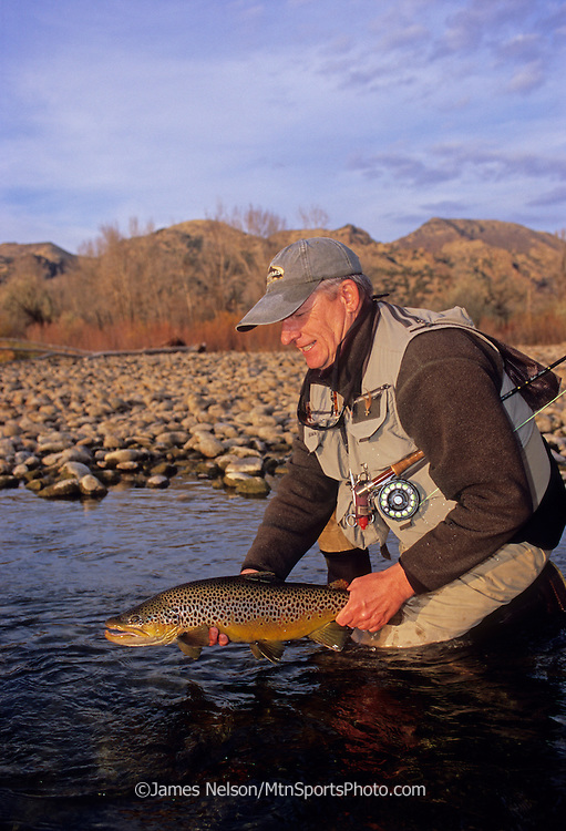 08205-D. An fly fisherman admires a large brown trout caught on during a fall afternoon on the South Fork of the Snake River, Idaho.