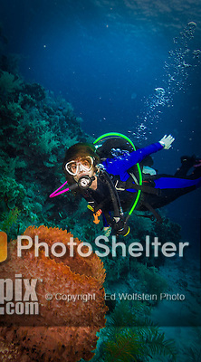 9 June 2015: SCUBA Diver Sally Herschorn finds a barrel sponge (Xestospongia muta) as she explores the environment at Spanish Bay Reef, on the North Shore of Grand Cayman Island. Located in the British West Indies in the Caribbean, the Cayman Islands are renowned for excellent scuba diving, snorkeling, beaches and banking.  Mandatory Credit: Ed Wolfstein Photo *** RAW (NEF) Image File Available ***