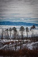 A row of fir trees stand among the burned remains of other trees that perished in a fire more than forty years ago. In the distance, low clouds shroud the Rio Grande Valley and the shoulders of the Sangre de Cristo Mountains.