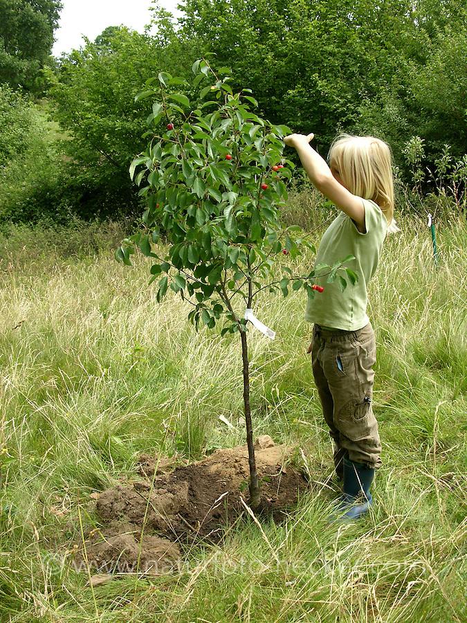 Baum pflanzen naturfoto frank hecker for Baum pflanzen