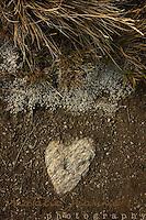 New Zealand Found Hearts