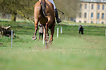 2017 Belton Horse Trials