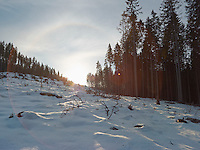 FOREST_LOCATION_90038
