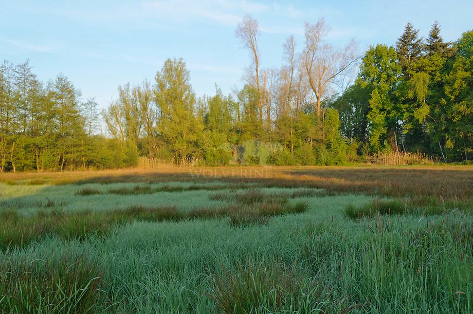 Houtsingels tussen weilanden, Haanwijk