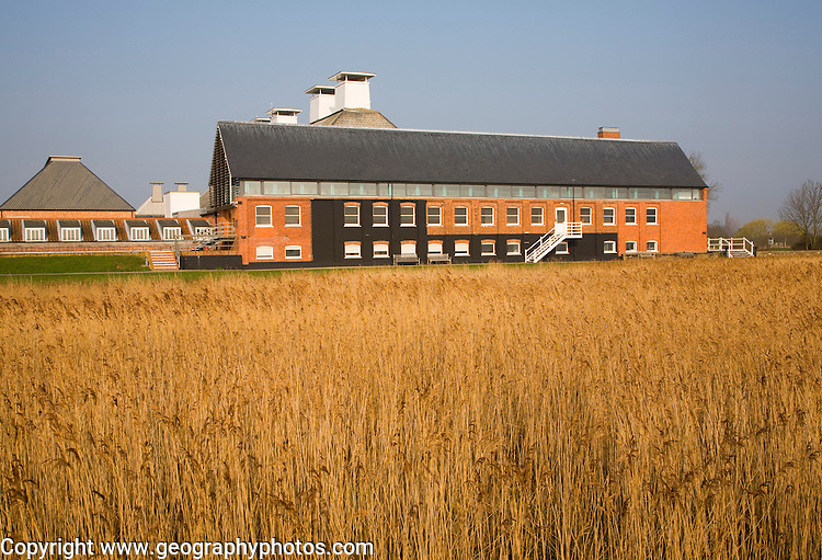 Concert hall seen over reeds at Snape Maltings. Suffolk, England