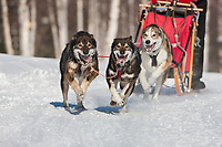 Melissa Ghosh drives a 4 dog team in the 2009 Limited North American sprint sled dog race, Fairbanks, Alaska.
