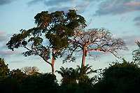 Viagem a comunidade Kayapó saindo do ramal P9 para aldeia <br /> Dcocumentação da comunidade indígena Kayapó Môikàràkô<br /> e ambiente na comunidade.<br /> Territorio indígena Kayapó, São Félix do Xingu, Pará, Brasil.<br /> Foto Paulo Santos