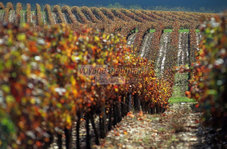 Europe/France/Midi-Pyrénées/46/Lot/Vallée du Lot/Vignoble de Cahors/Env Douelle: Vignoble des côtes d'Olt à l'automne