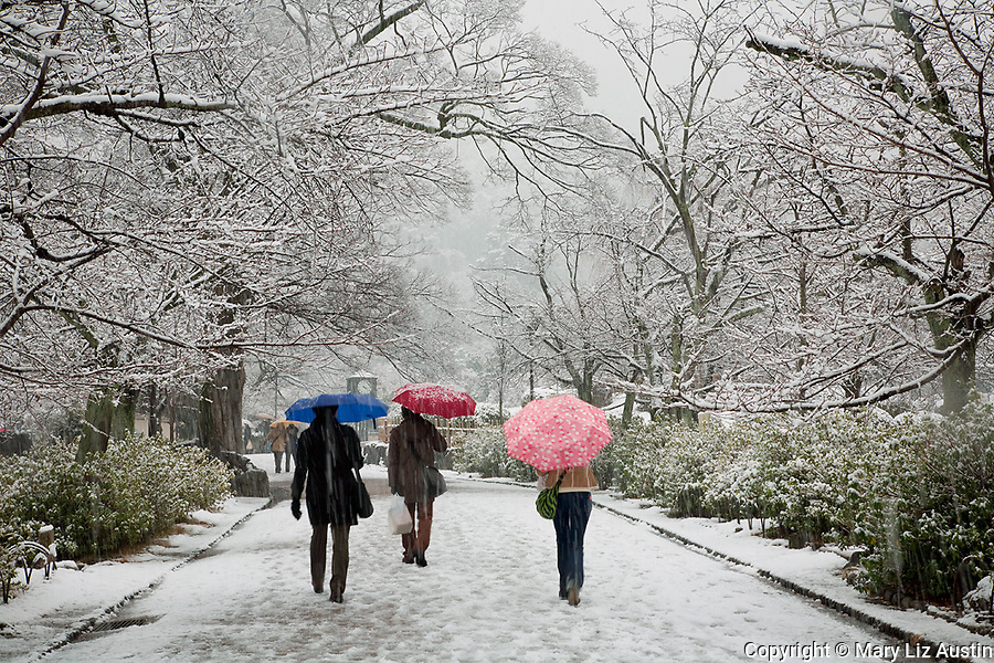 Kyoto City, Japan<br /> A snowfall in Maruyama Park near Yasaka Shrine with cherry trees lining a walkway and pedestrians carrying colorful umbrellas