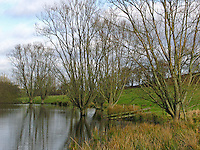 Kopfweiden, Kopfweide, Kopfbaum an Gewässer, Ufer, Teich, Weide, Weiden, Salix spec., Hellmoor, Panten, Schleswig-Holstein