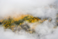 Fog swirling in colorful aspen trees. Ouray, CO