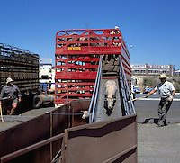 Sheep trailer, Fremantle, Australia