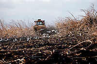 Harvesting sugar cane at sunset, Haili'imaile Plantation, Maui