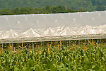 Tomato hoop house. Sugar Valley, PA.