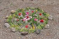 Blumen-Mandala, Blumenmandala, Mandala aus Blumen, Blüten, Blütenblättern, Blüten von Rose, Klatschmohn, Frauenmantel, Gilbweiderich und anderen mehr