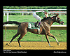Royal Atheena .The 1999 Pratt Insurance / Markel Handicap