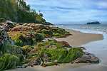 Vancouver Island, British Columbia: Tonkin Beach near Tofino