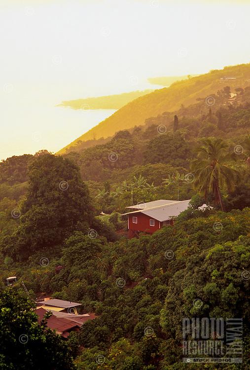 Kona coffee fields, Kealakekua