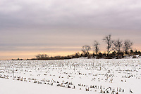 &quot;Dead of Winter&quot;<br />