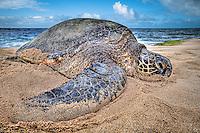 Hawaii - Fauna