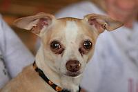 Dog Agility Trials, Kiln, MS.