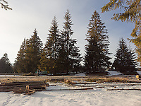 FOREST_LOCATION_90153