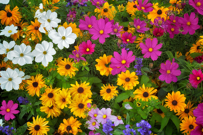 Mixed flowers. Vail, Colorado