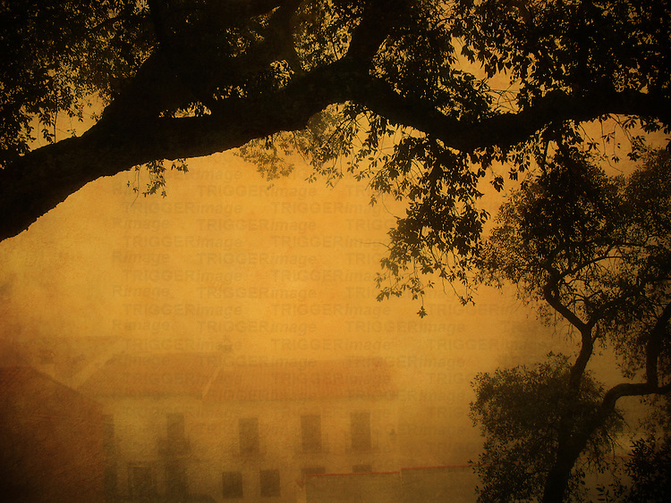 A countryside view with trees and houses in mist