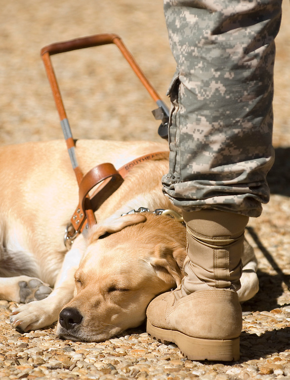 Gillian, a seeing eye dog for Army 1st Lt. Joseph Bogart, rests at his feet while he attends a news conference in Upper Senate Park on Wednesday, Sept. 12, 2007. The event was held by several veteran's advocacy groups to urge conference to urge Congress to pass a final version of the Dignified Treatment of Wounded Warriors Act. Lt. Bogart lost his right eye, and was blinded in his left eye in an IED explosion in Iraq on October 6, 2006.