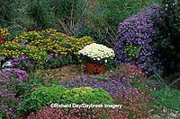 63821-12915 Fall Garden - Chrysanthemums, Jack-o-Lantern, New England Asters, Melampodium, Diascias, globe basil, ageratum, & scaevola IL