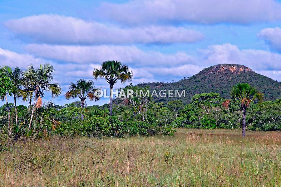 Parque Nacional Grande Sertão Veredas. Minas Gerais. Foto de Adriano Gambarini.