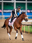 LOUISVILLE, KENTUCKY - MAY 02: Bellafina prepares for the Kentucky Oaks at Churchill Downs in Louisville, Kentucky on May 01, 2019. Evers/Eclipse Sportswire/CSM