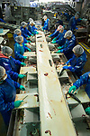 Processing and canning Salmon. Alaska General Seafoods. Ketchikan Alaska.  2017