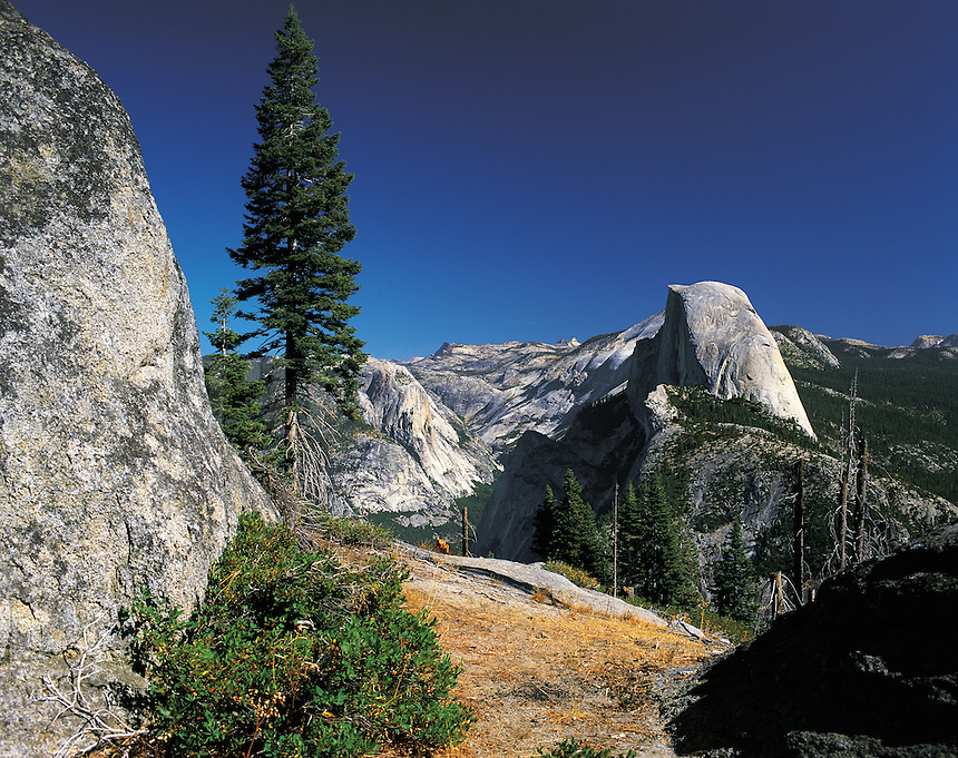 Half Dome seen within a panorama of glacier-polished rock-faces and pine forests, Yosemite Valley national Park, California, US