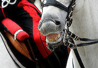 Un cavallo del picchetto d'onore mostra i denti al termine della cerimonia di inaugurazione dell'anno accademico della Scuola Ufficiali Carabinieri a Roma, 18 febbraio 2010..A horse shows his teeth at the end of the inauguration of the Academic Year of the Carabinieri Offficers Academy in Rome, 18 february 2010..UPDATE IMAGES PRESS/Riccardo De Luca