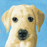 Portrait of Labrador puppy dog ExclusiveImage